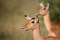 selective focus photo of brown deer