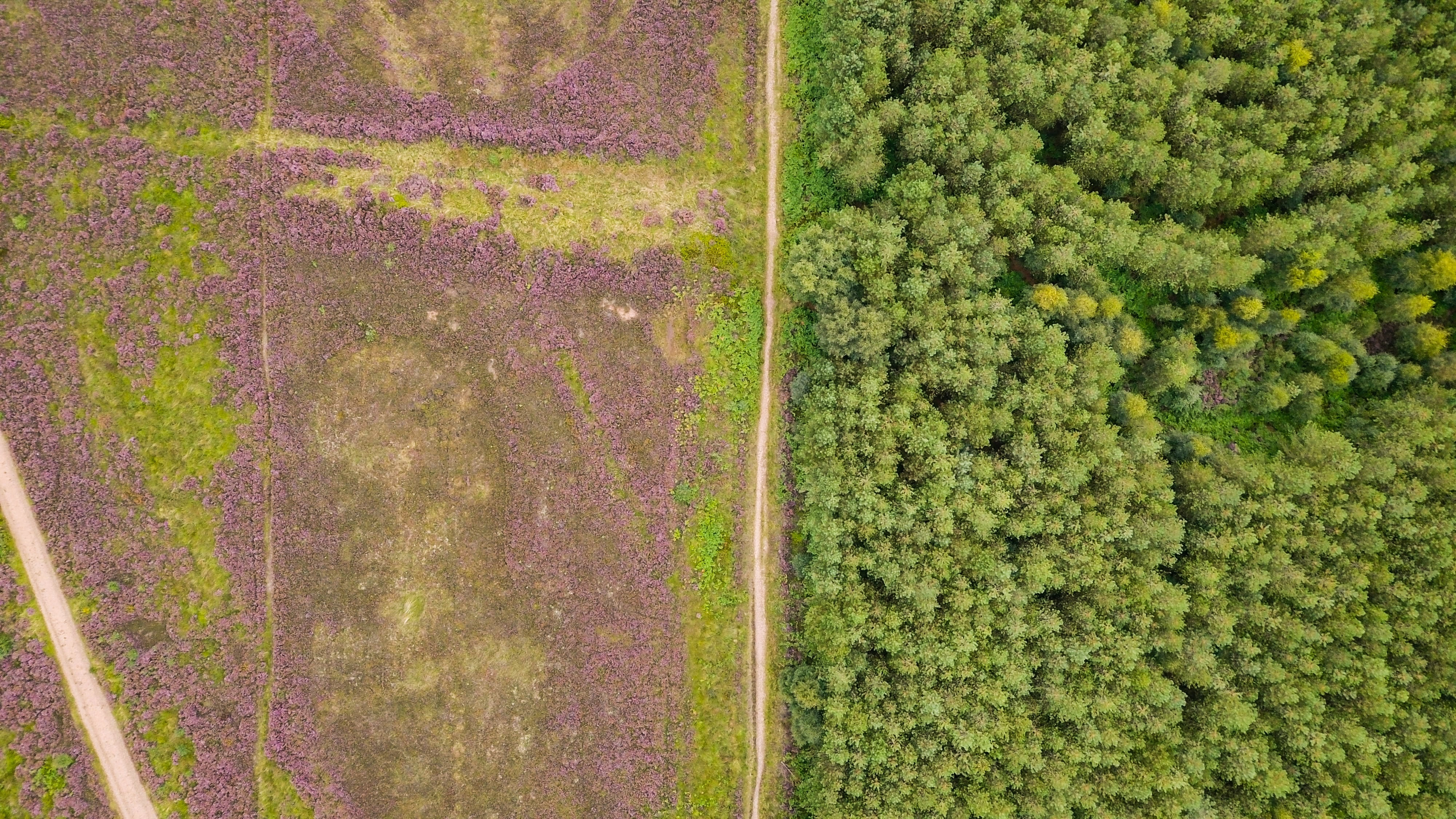 bird's-view photo of field and forest