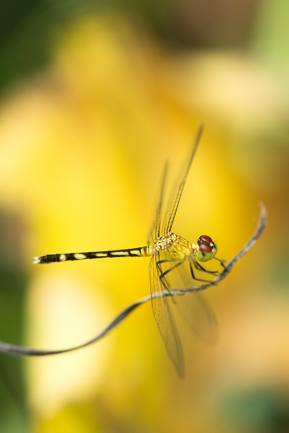 selective focus photography of green dragonfly perching on brown stem