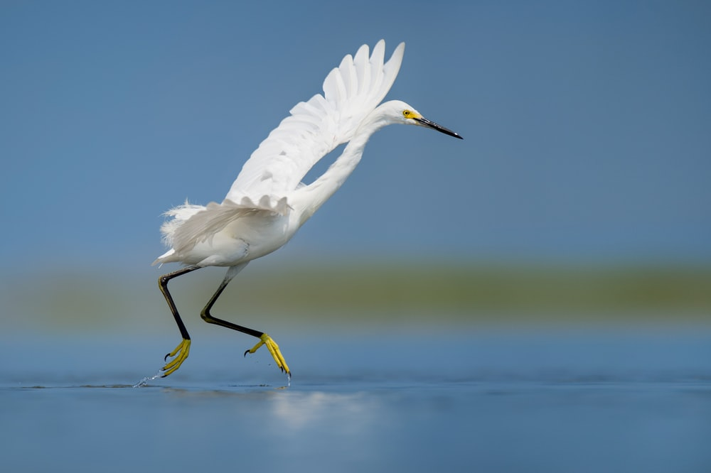 white bird on body of water