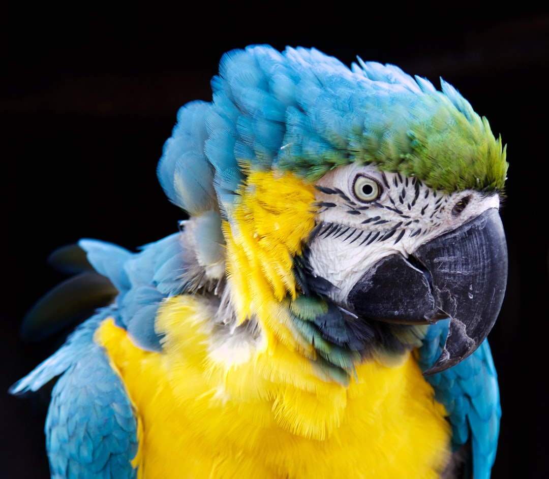 """Rodney was an amazing Parrot at Coton Manor Gardens, always obliged with a """"Give us a kiss"""""""