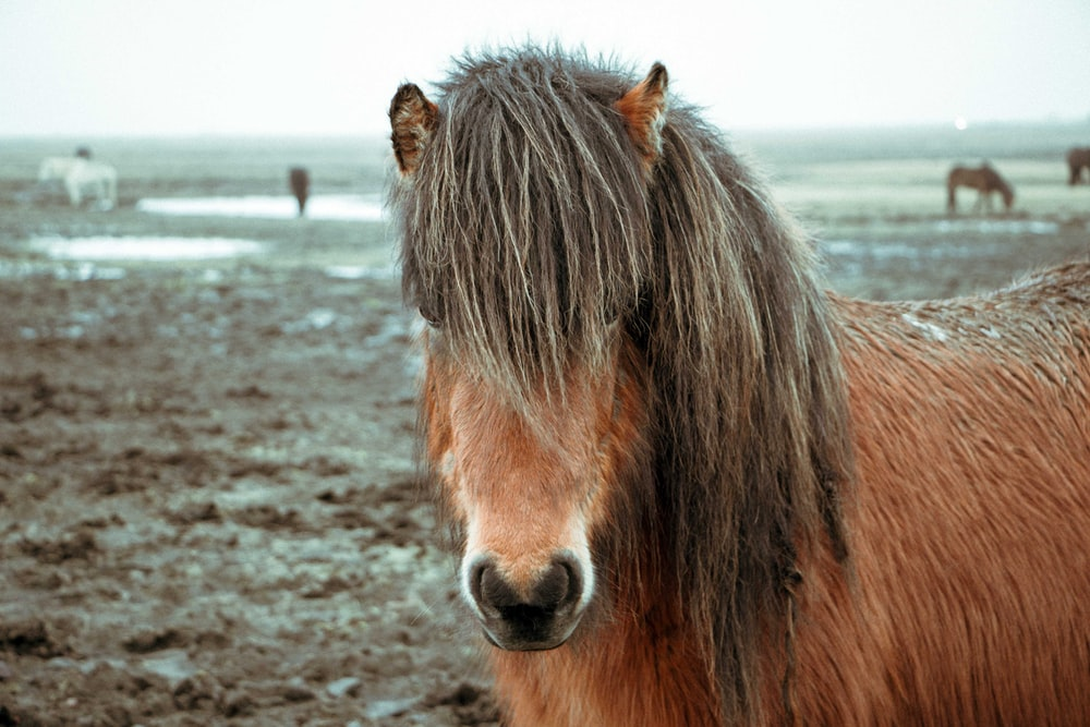 closeup photography of brown horse standing on brown soil