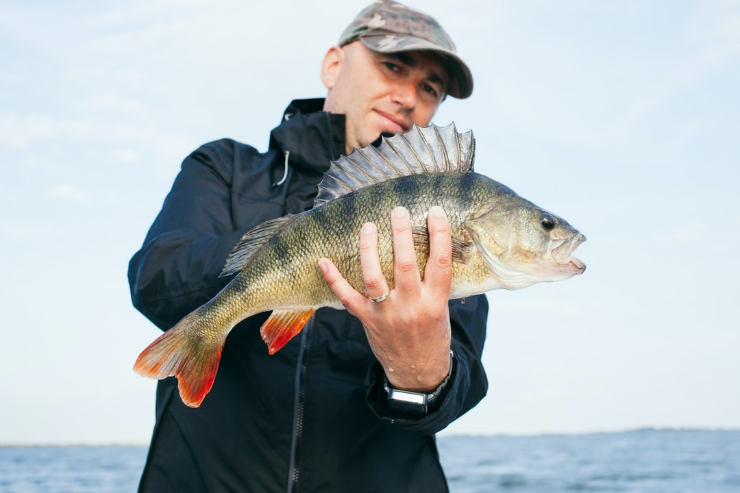 Fisherman with a bass in Holland