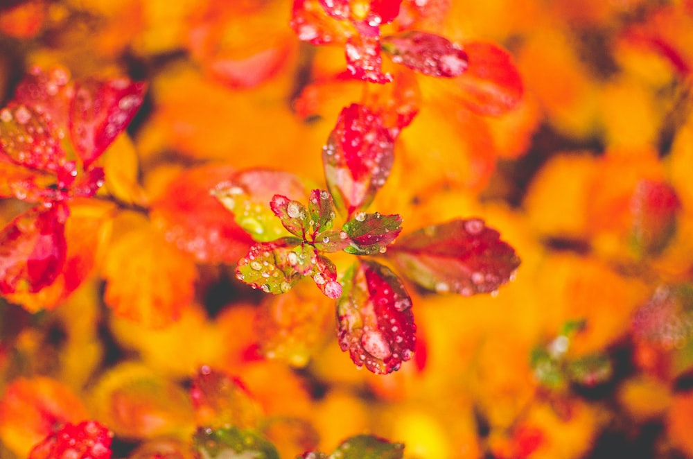 macro photography of red plant