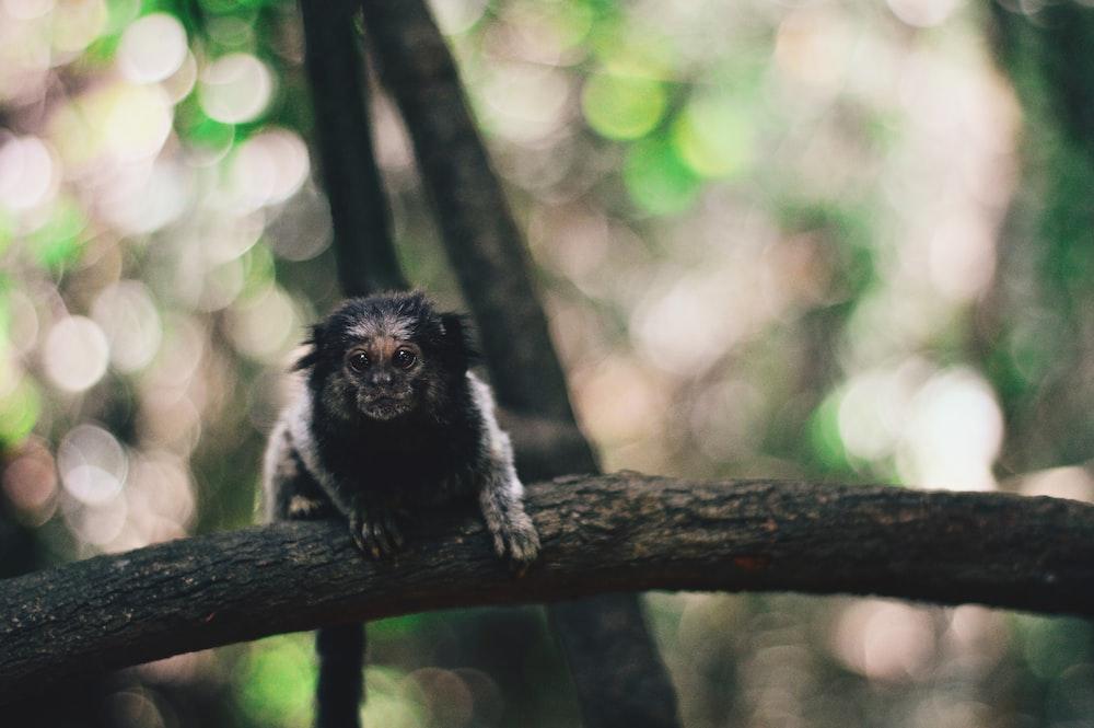 shallow focus photography of black monkey sitting on black tree branch