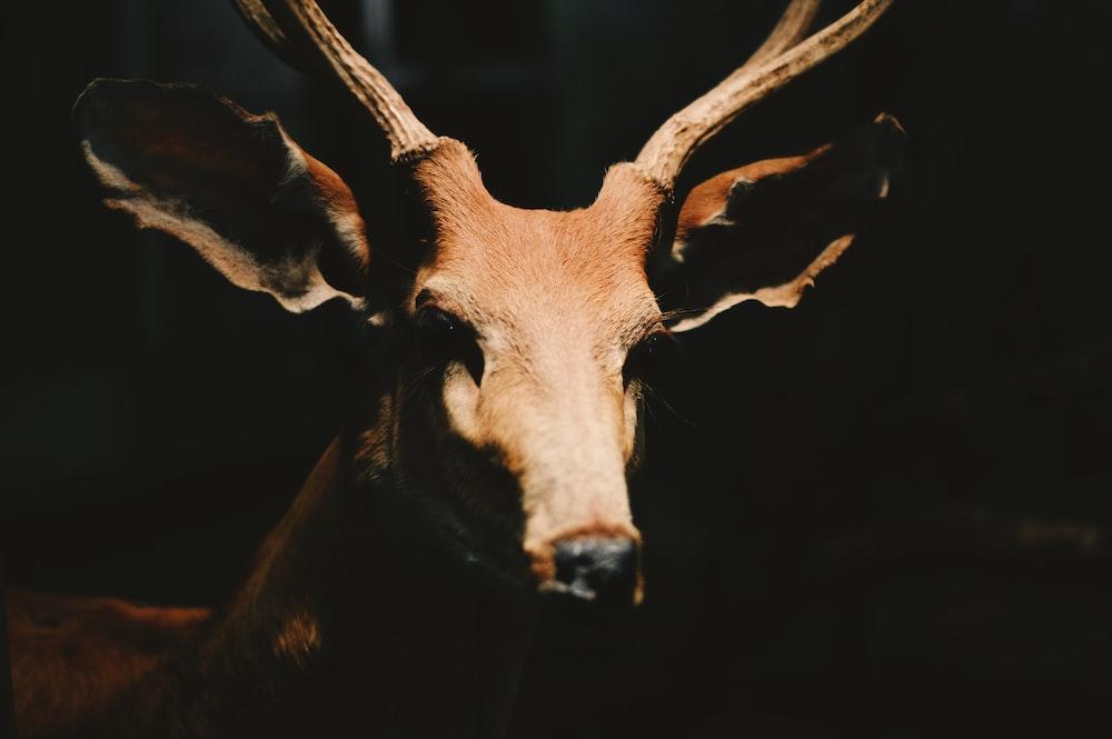 closeup photography of brown animal