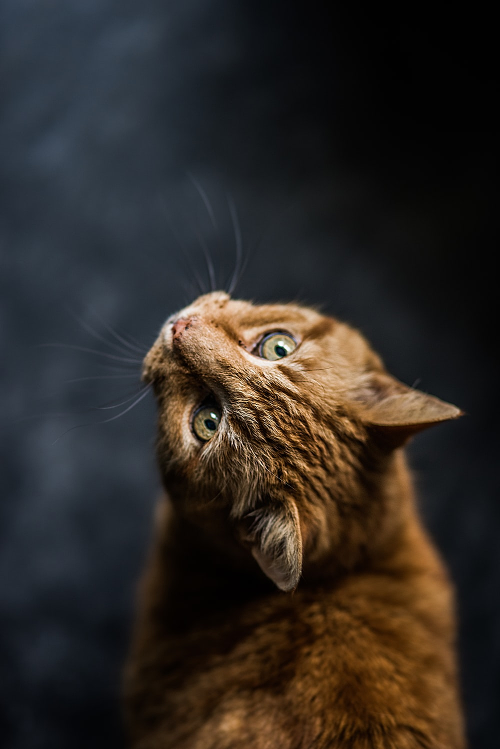 selective focus and low-angle photography of orange tabby cat