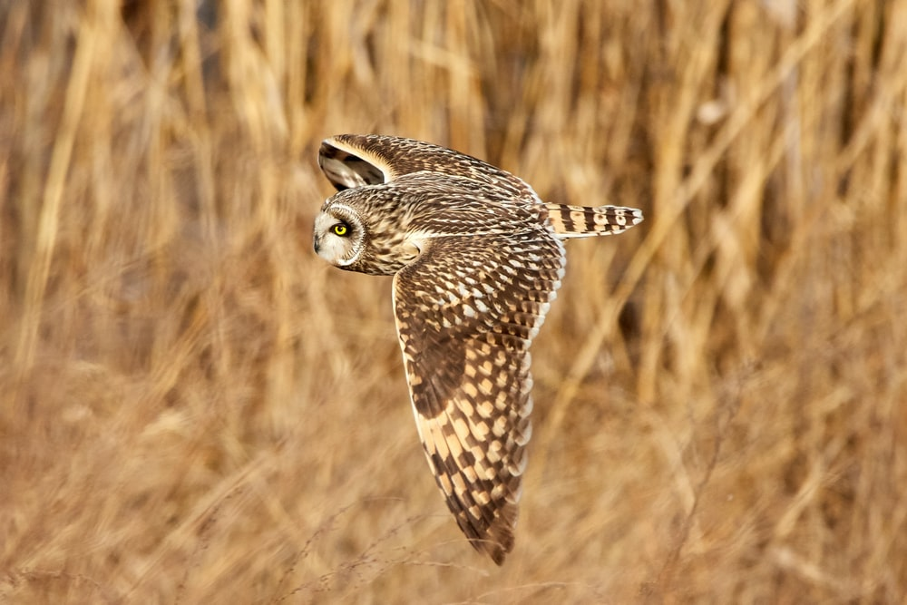 shallow focus photography of owl flying