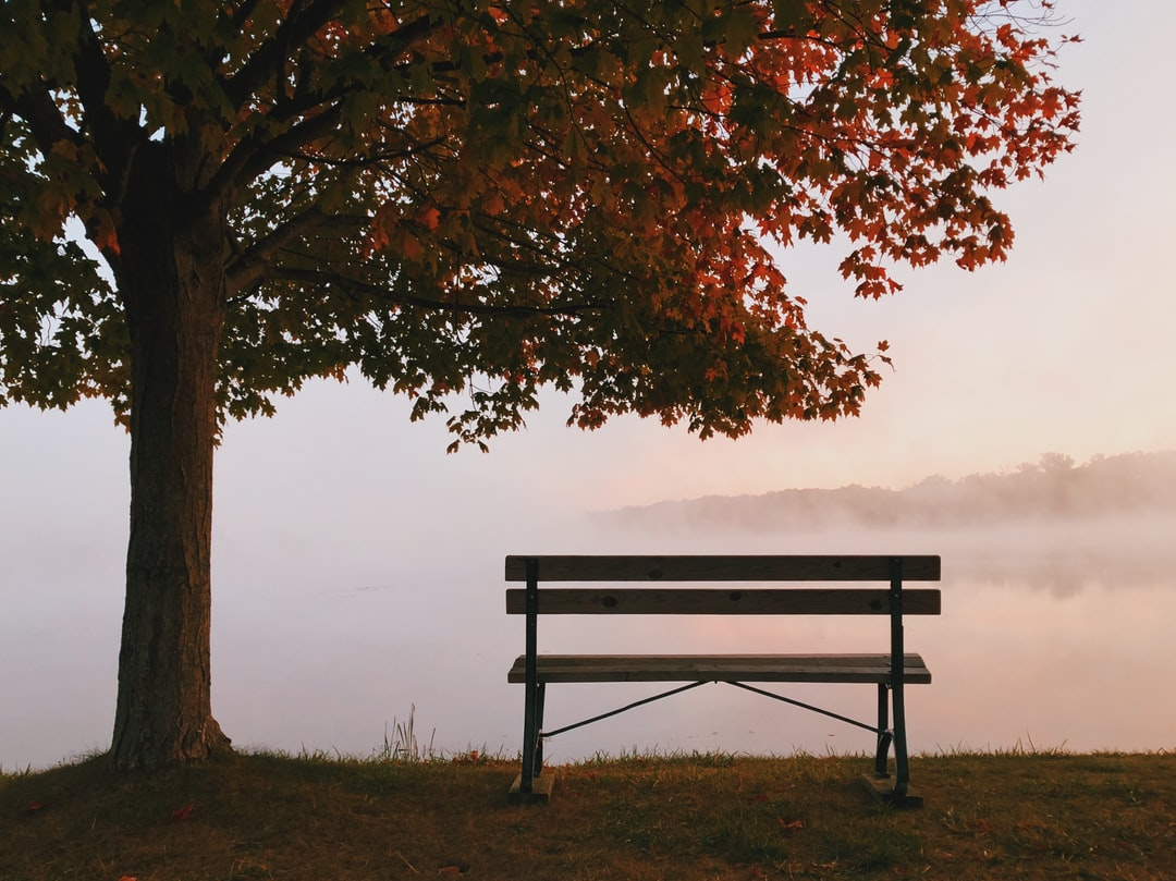 500 Bench Pictures Hd Download Free Images On Unsplash