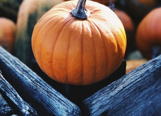 focus photography of pumpkin