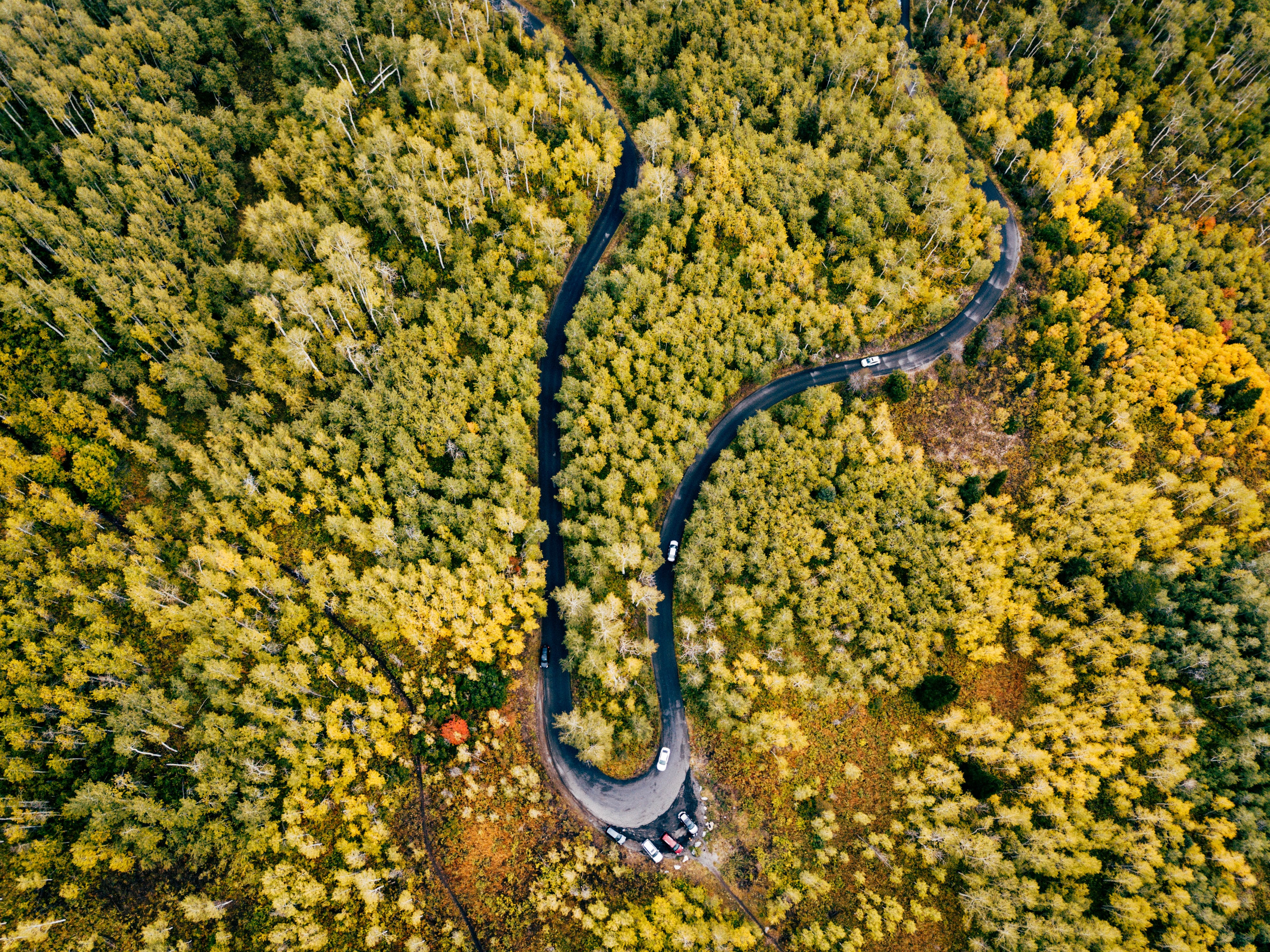 top view photo of wavy road with trees at daytime