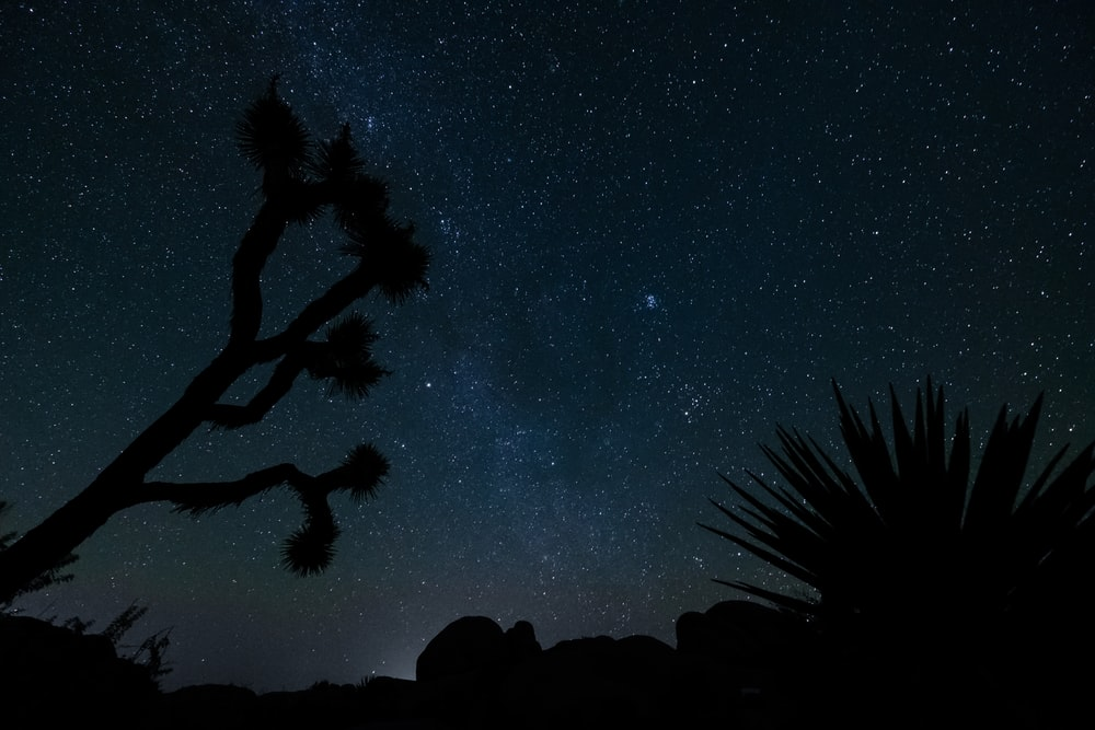 Silhouette Of Plants During Nighttime