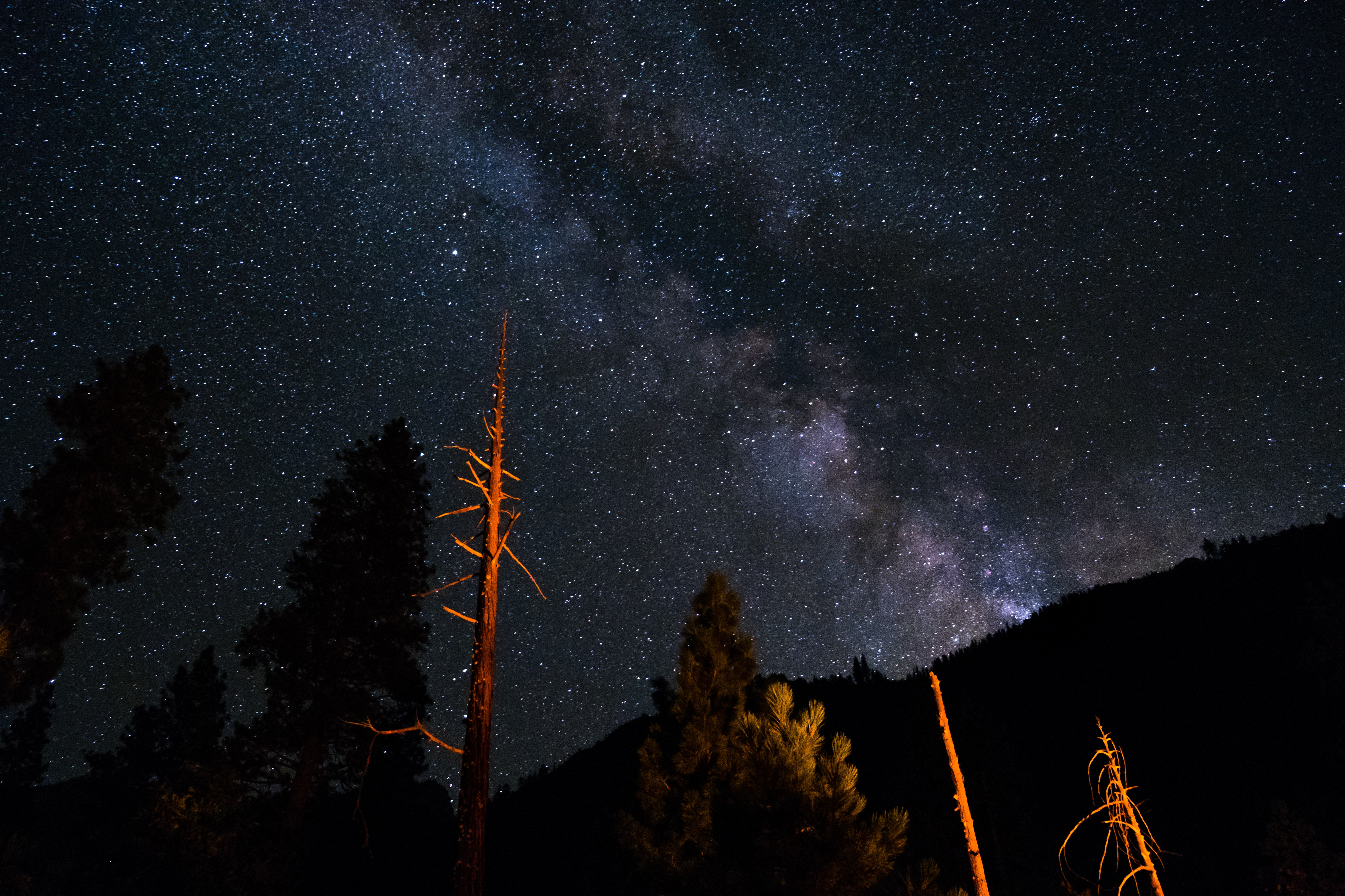 low angle photography of trees under sky with stars