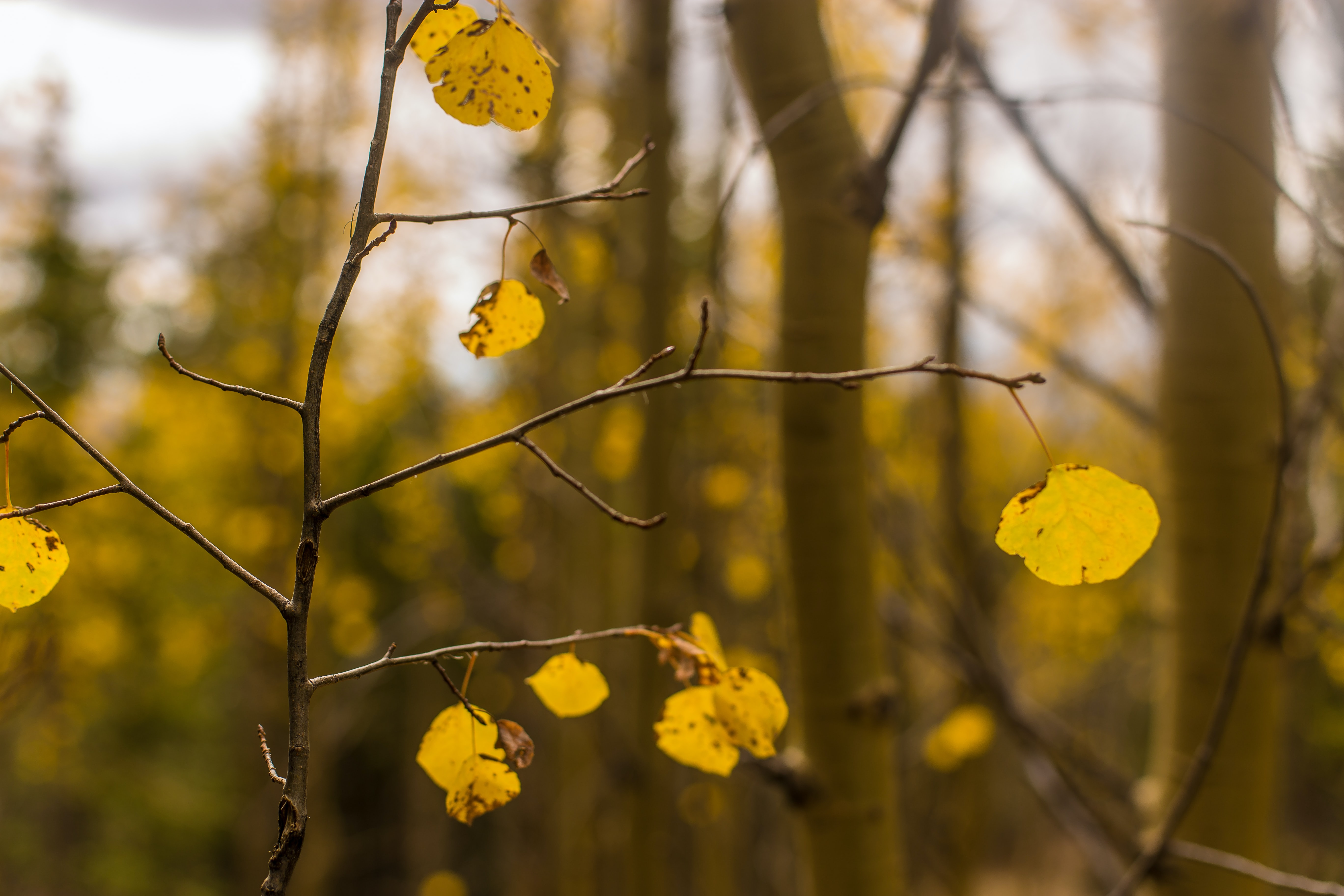 selective photography of yellow leaf plant