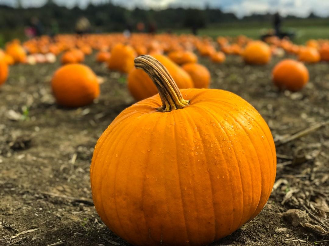 Pumpkin, Pumpkin Patch, Field And Harvest HD Photo By