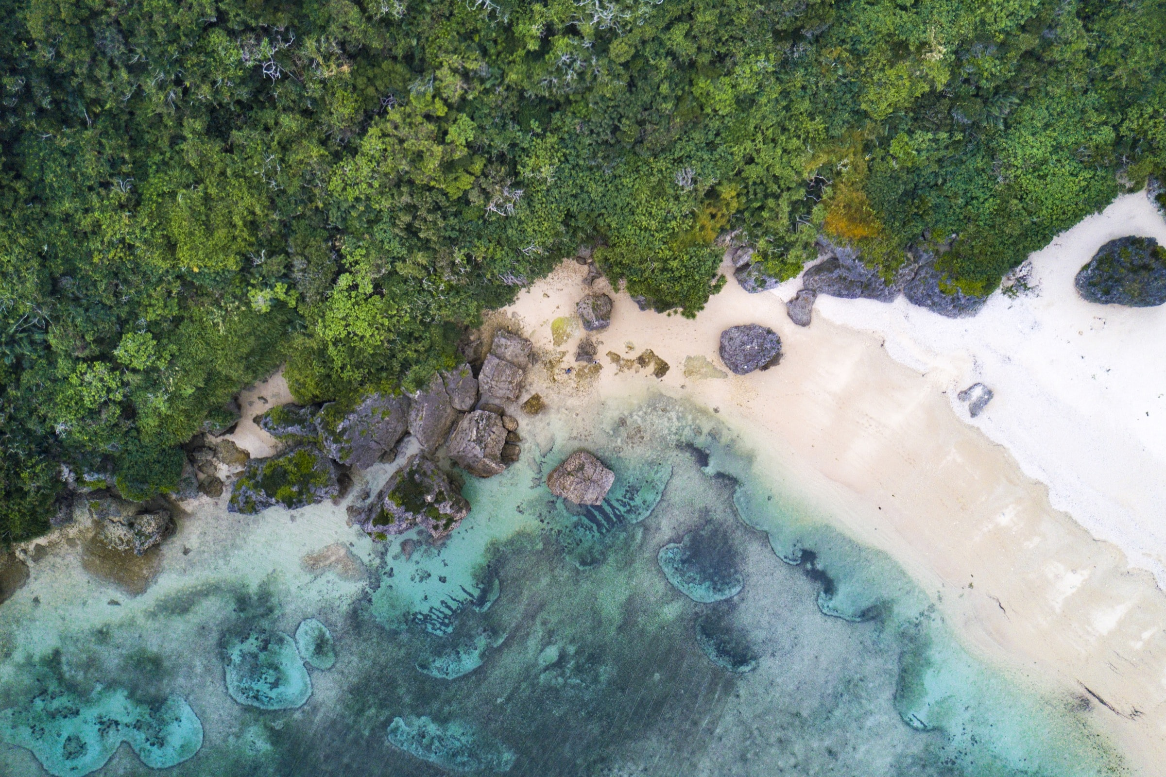 aerial photography of sea beside green trees during daytime