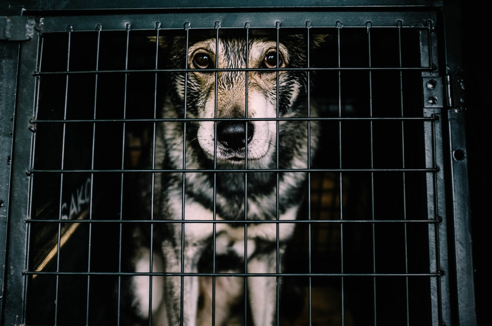 white and black dog inside cage