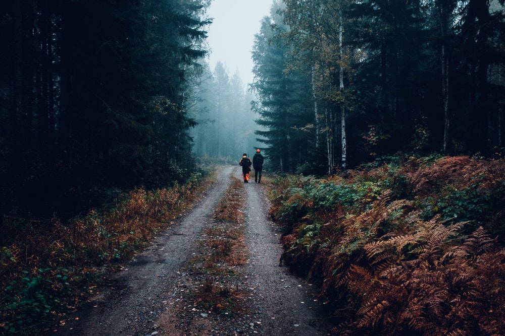 two person walking in between tall trees during cloudy sky