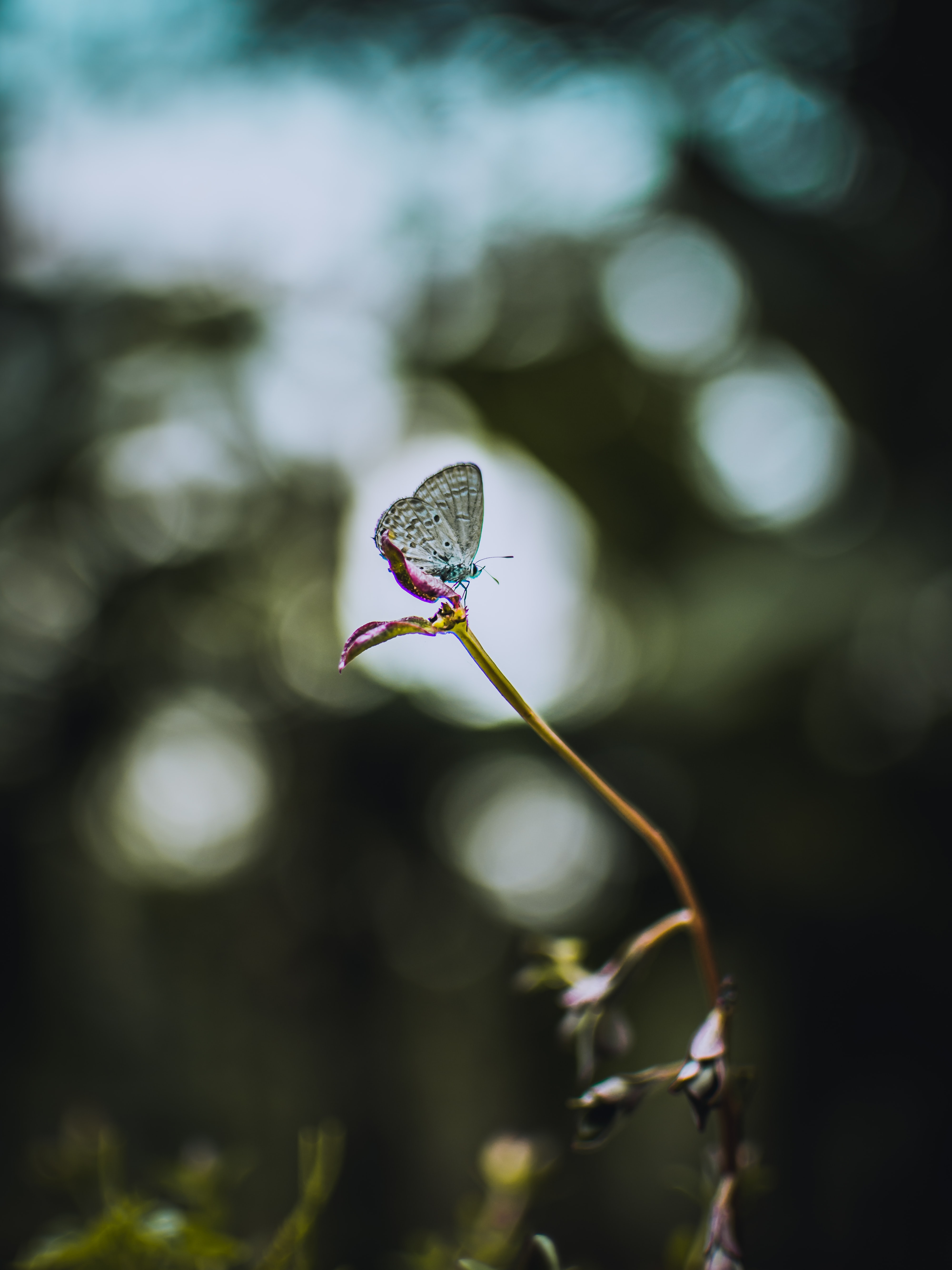selective focus photography white butterfly perching on flower