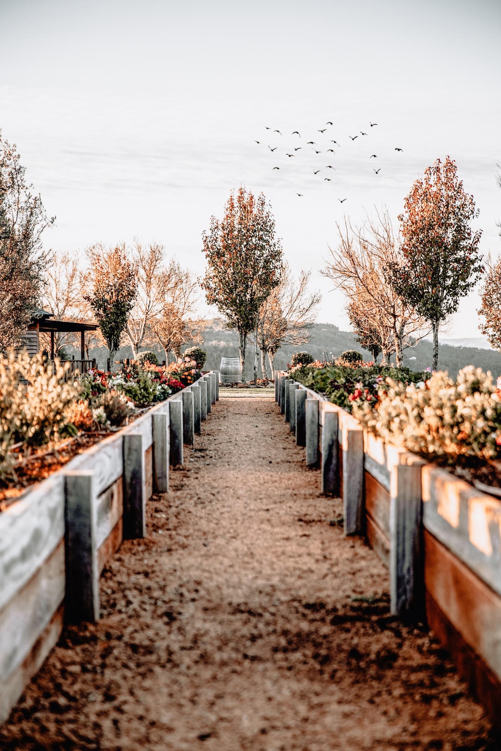 pathway between two wooden fences