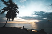 silhouette of coconut tree beside the seshore