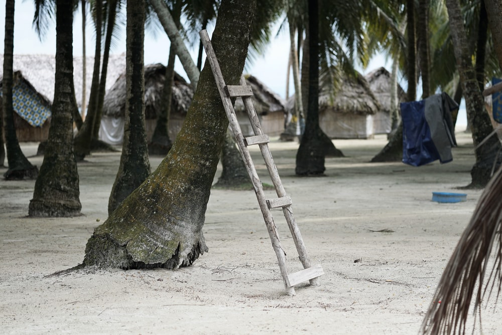 wooden ladder leaning on palm tree