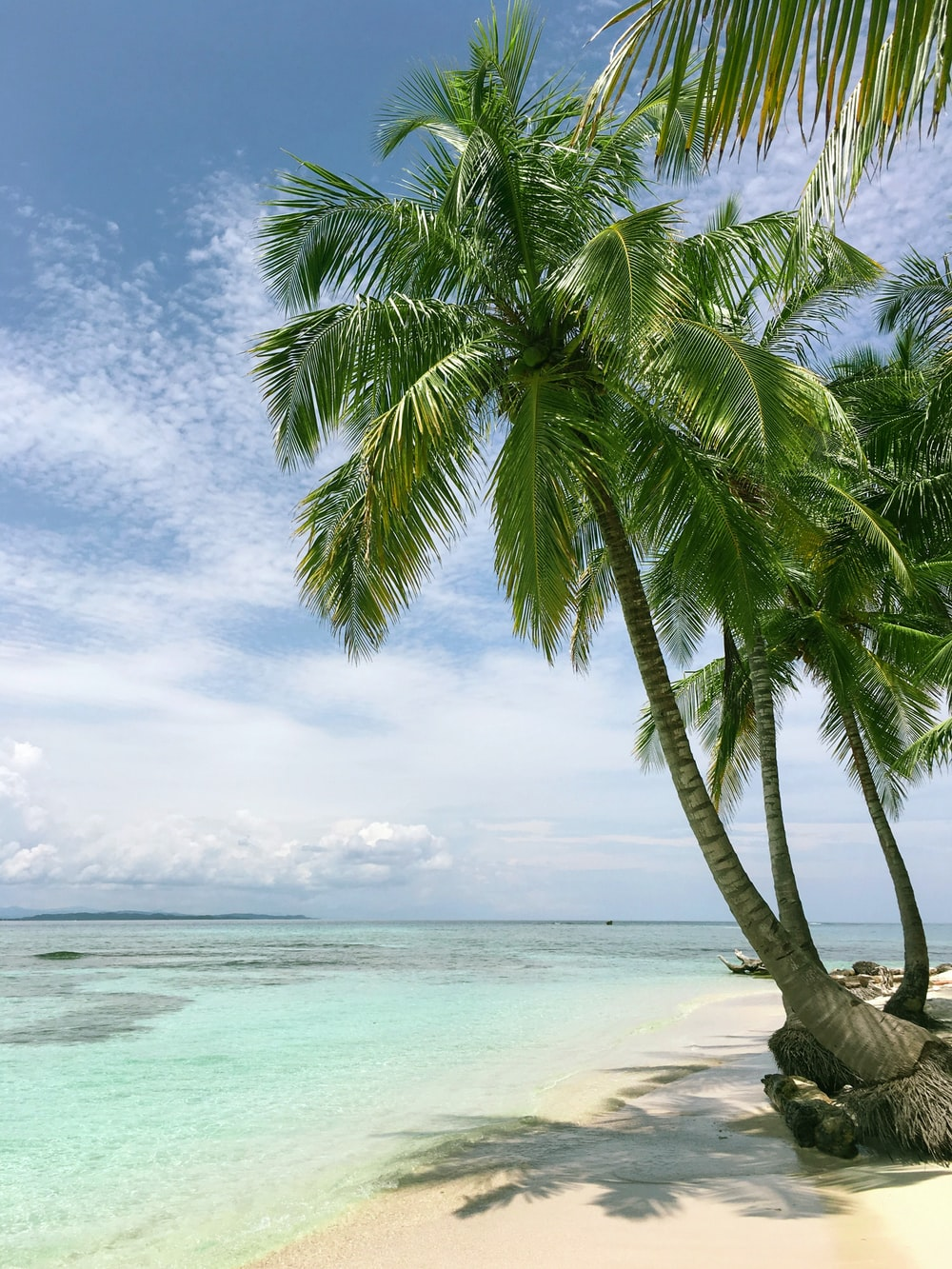 palm tree near seashore