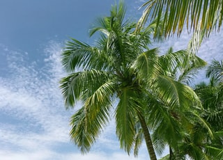palm tree near seashore