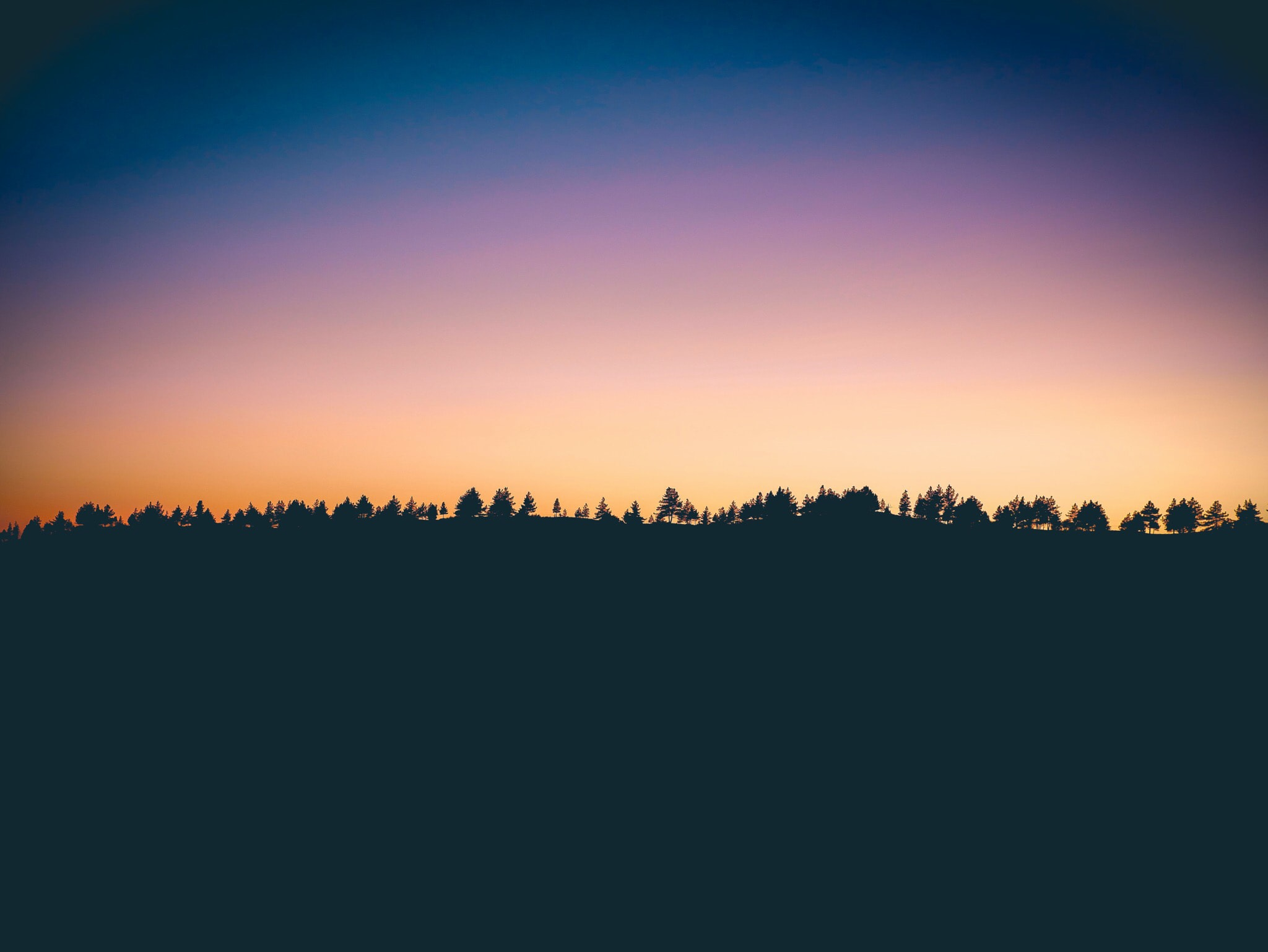 silhouette photo of trees at sunset