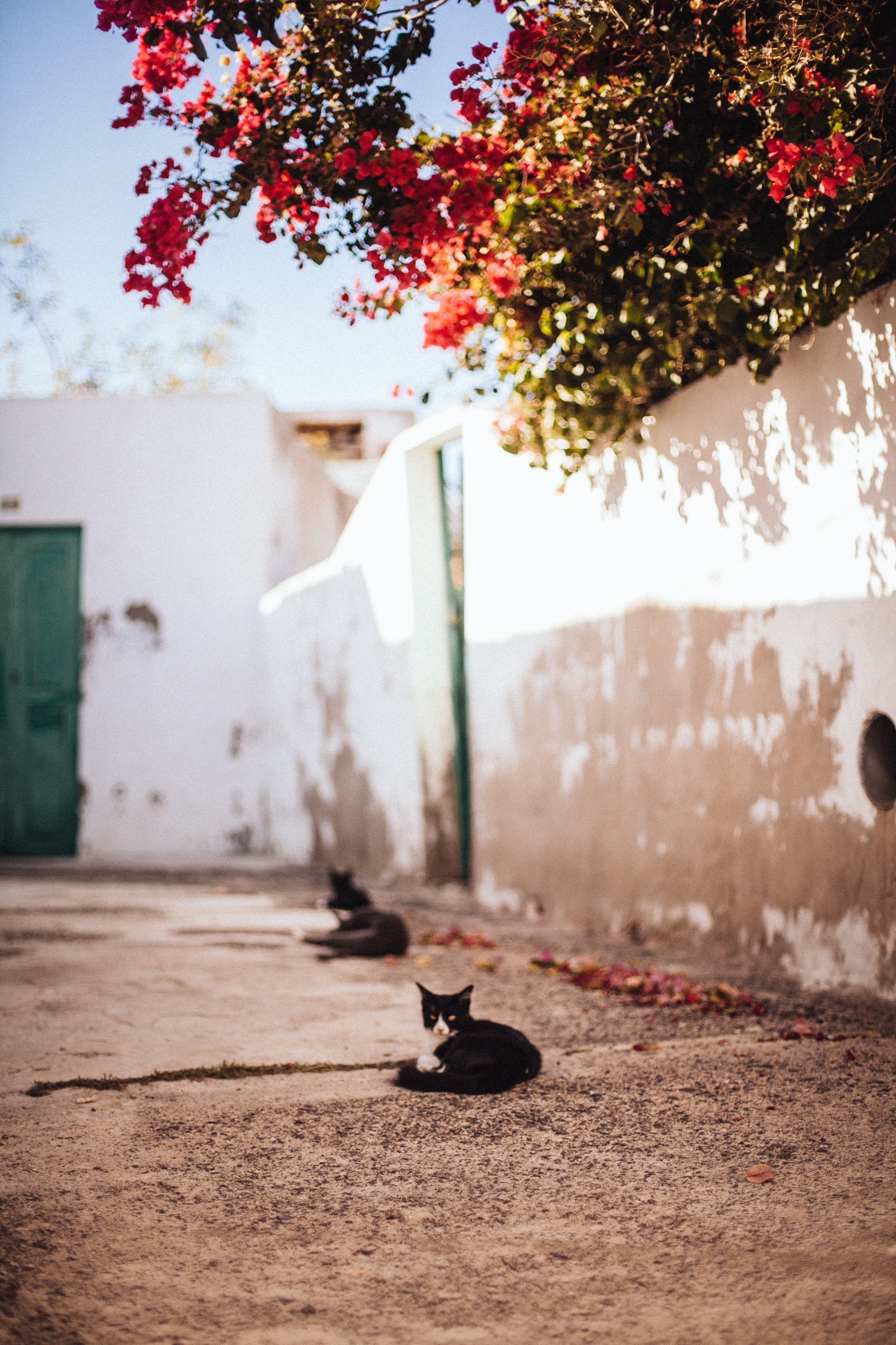 selective focus photography of tuxedo cat lying on brown pavement