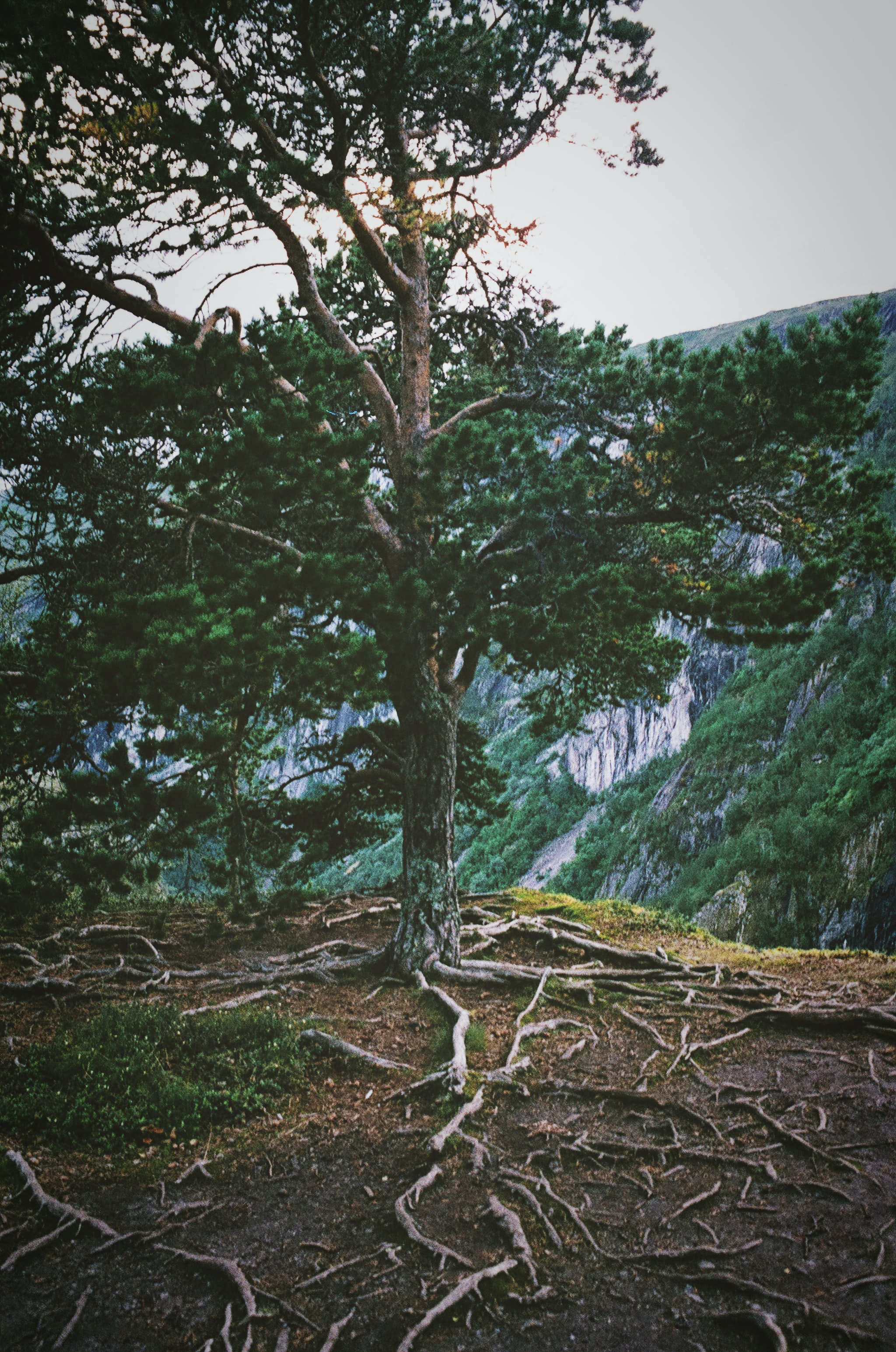 green leaf tree near mountain cliff