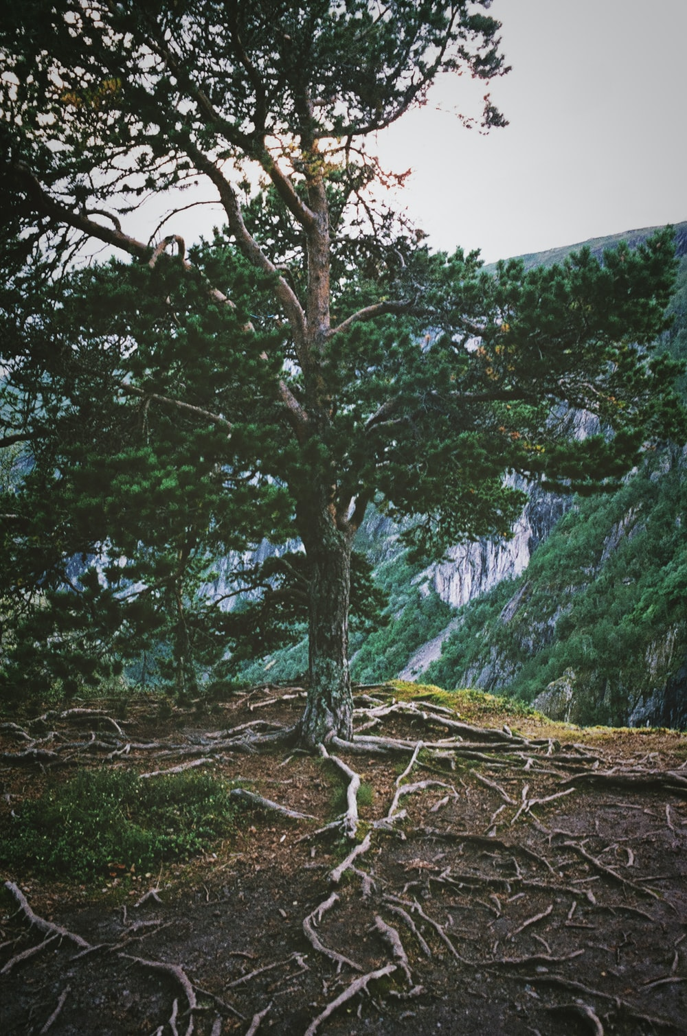 green leaf tree near mountain cliff
