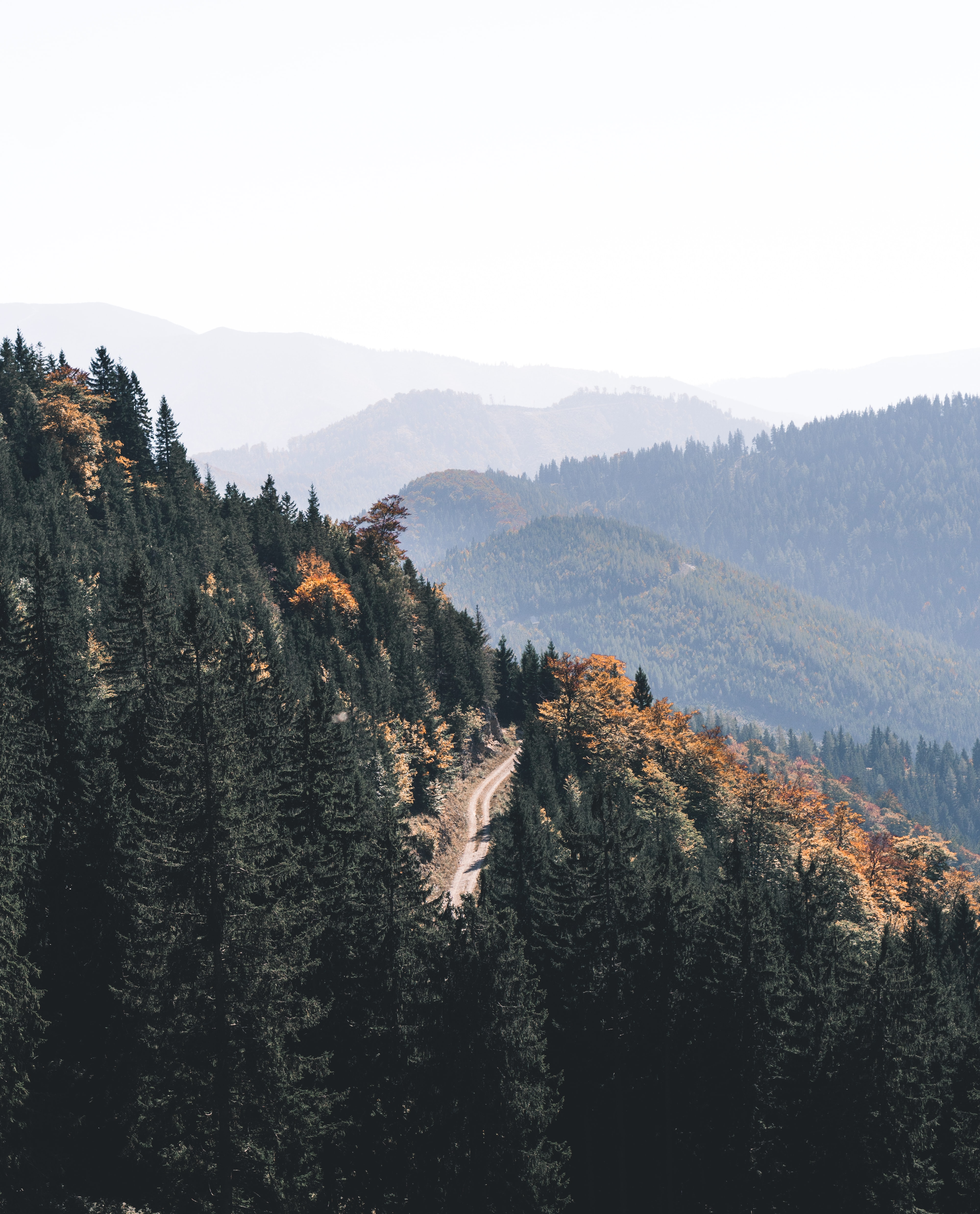 tall green trees on mountains under white sky during daytime