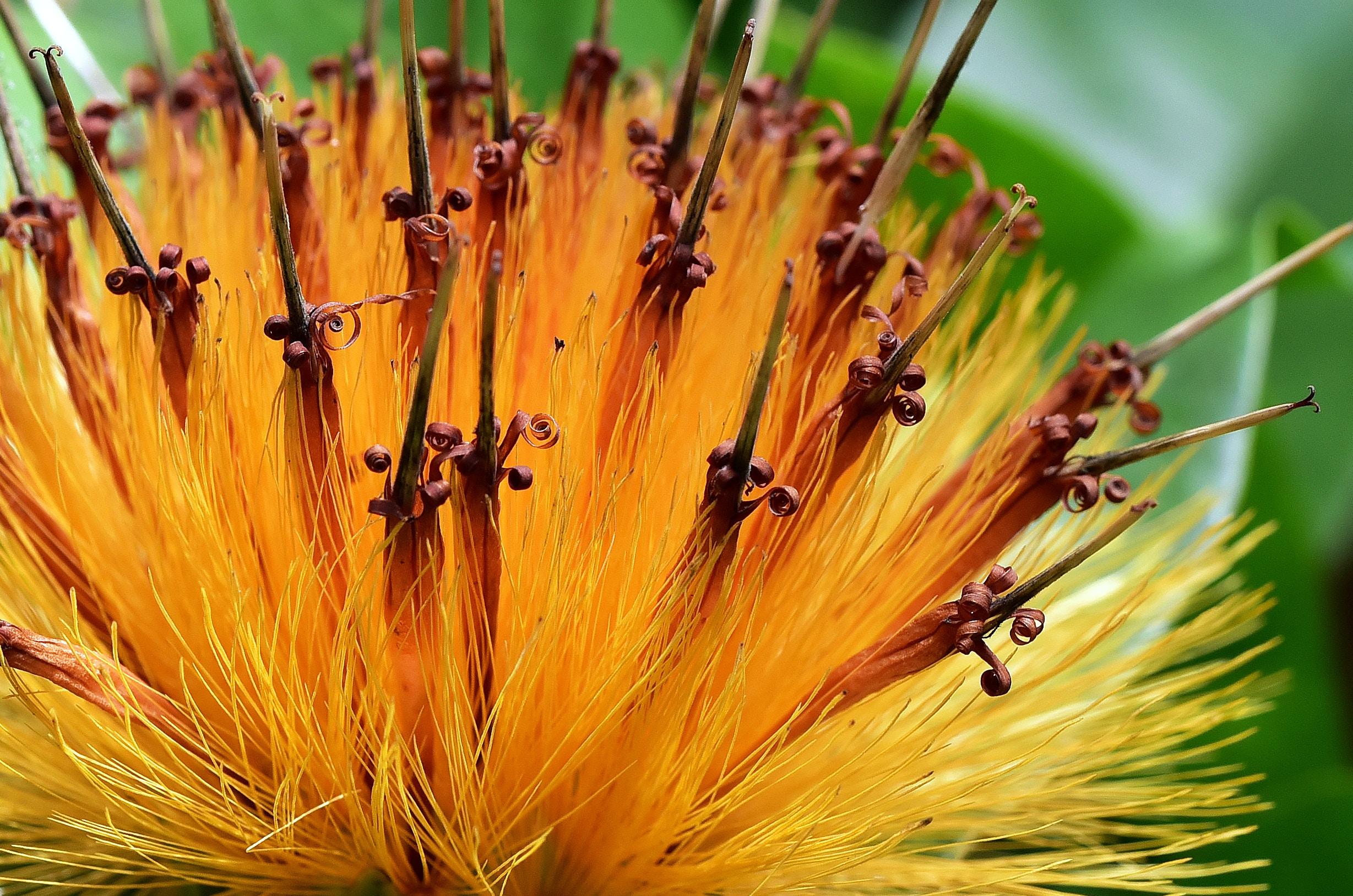 shallow lens photography of orange flower