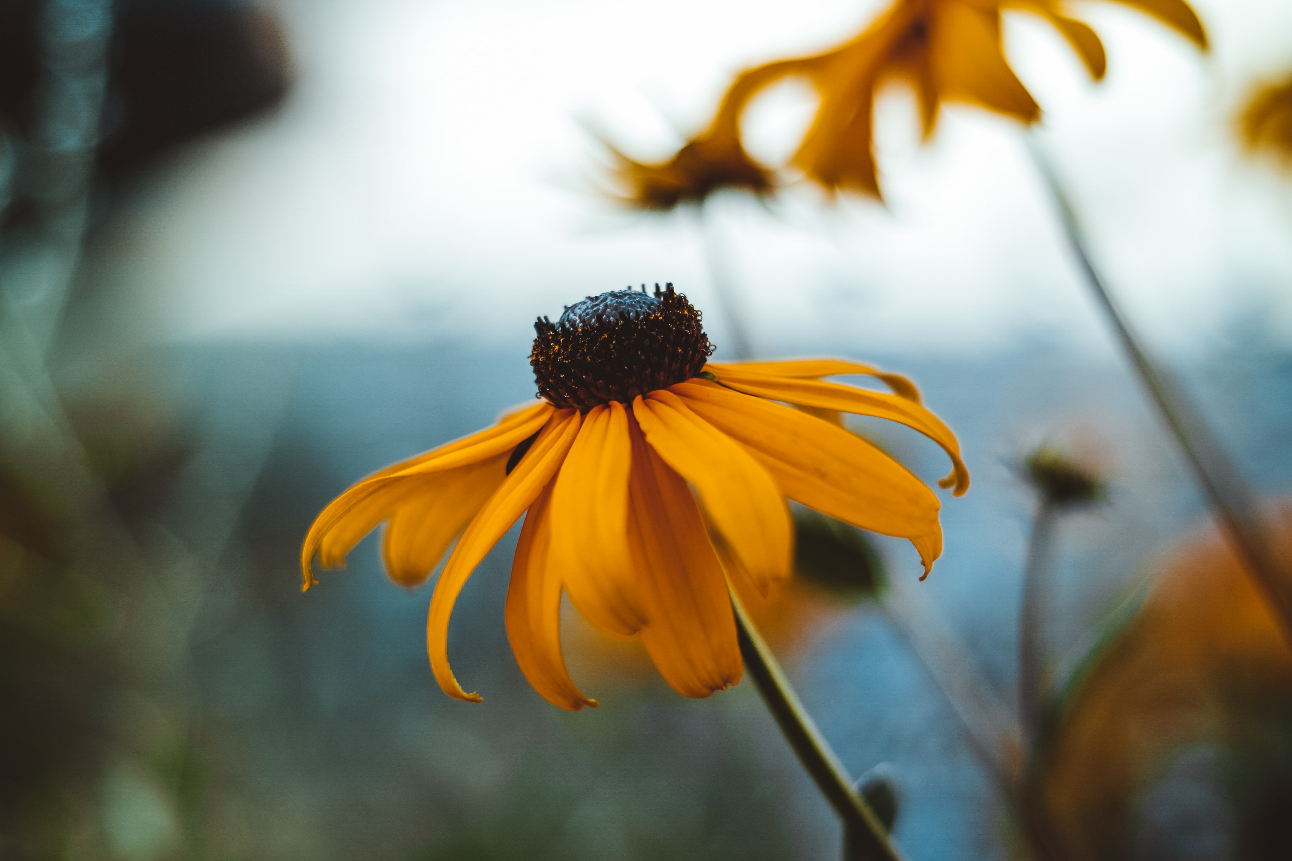 selective photo of yellow petaled flower