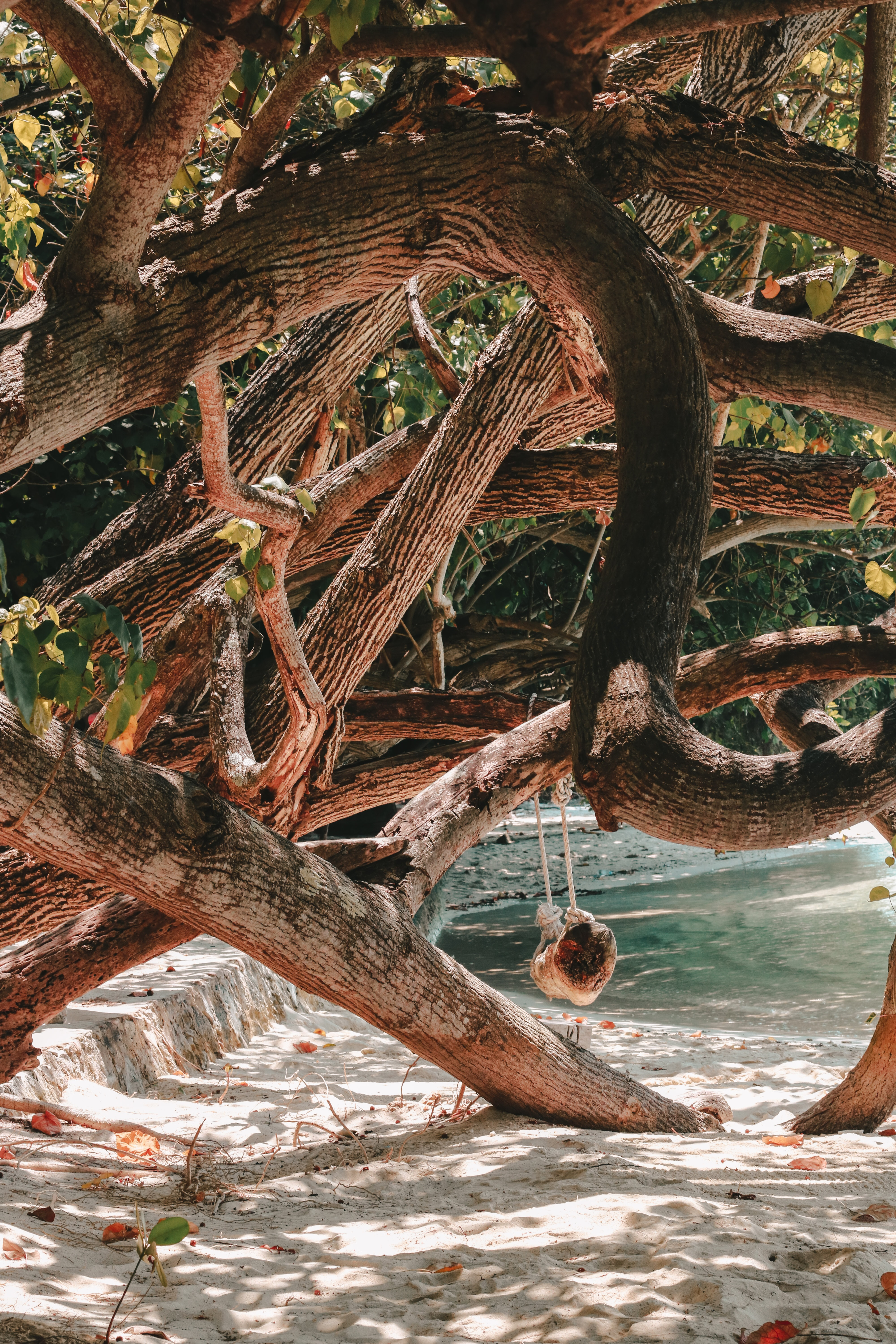photo of mangrove by the sea