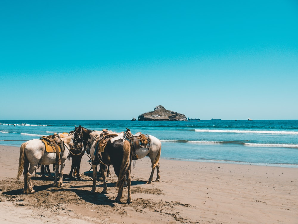 horses near shore under clear sky during daytime
