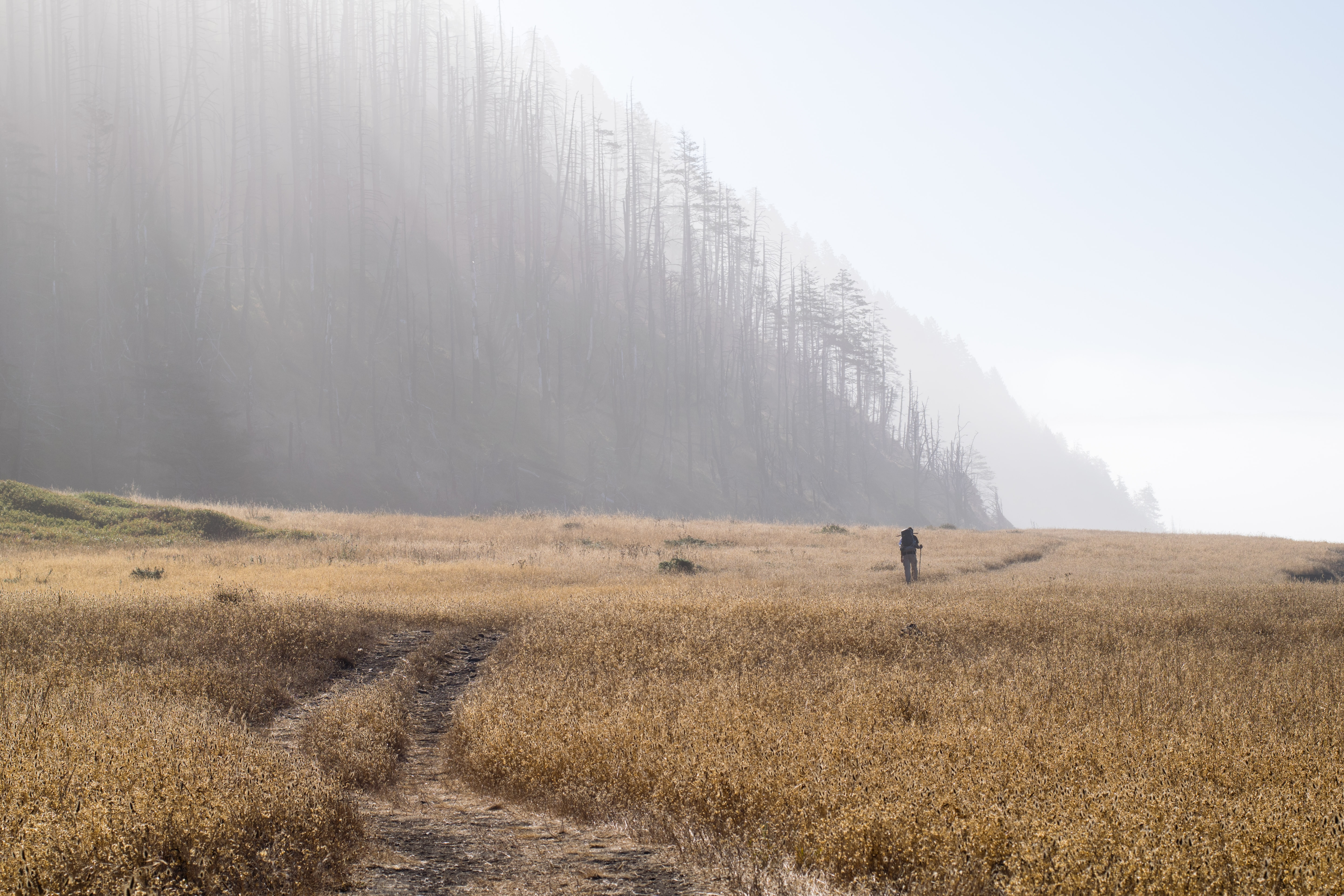 man standing on brown grass field in front of forest