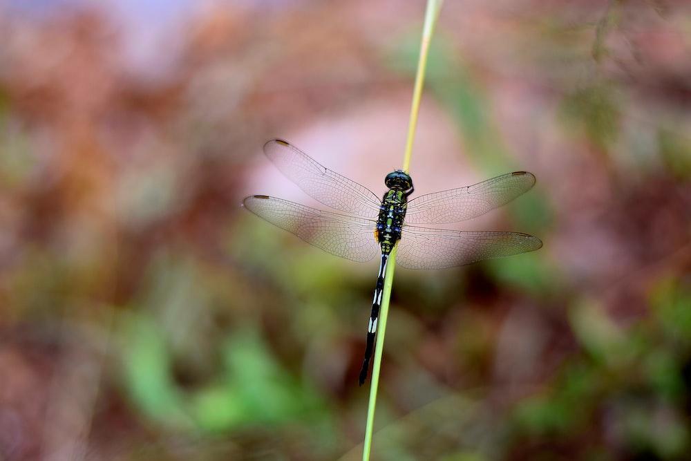 Chinnar Wildlife Sanctuary , Munnar, India Pictures