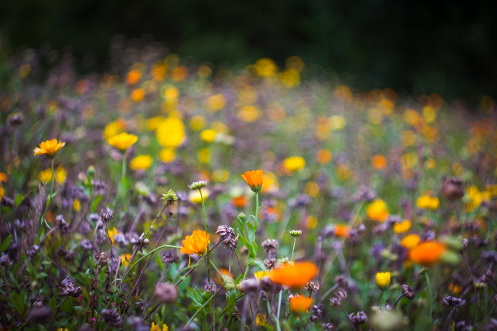 selective focus photography of orange and yellow petaled flowers