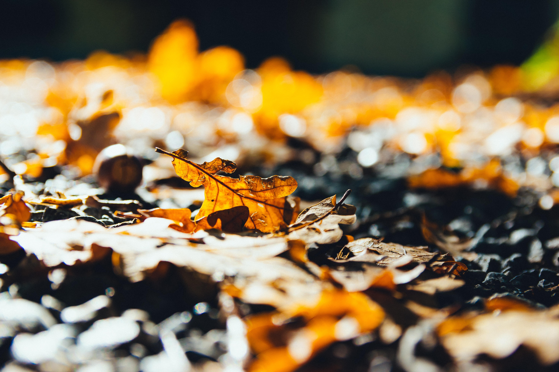 close-up photo of dried leaf