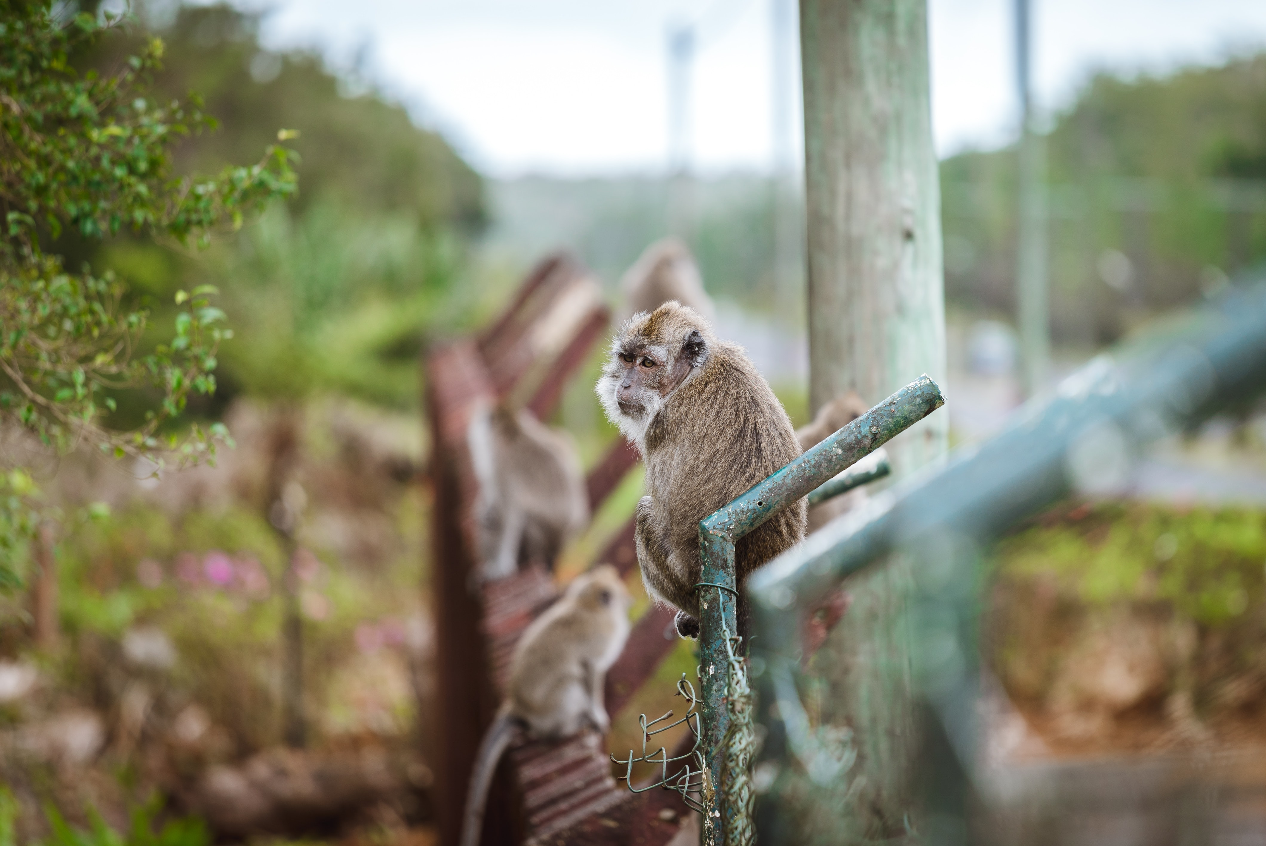 selective focus photography of brown monkey on grey railing