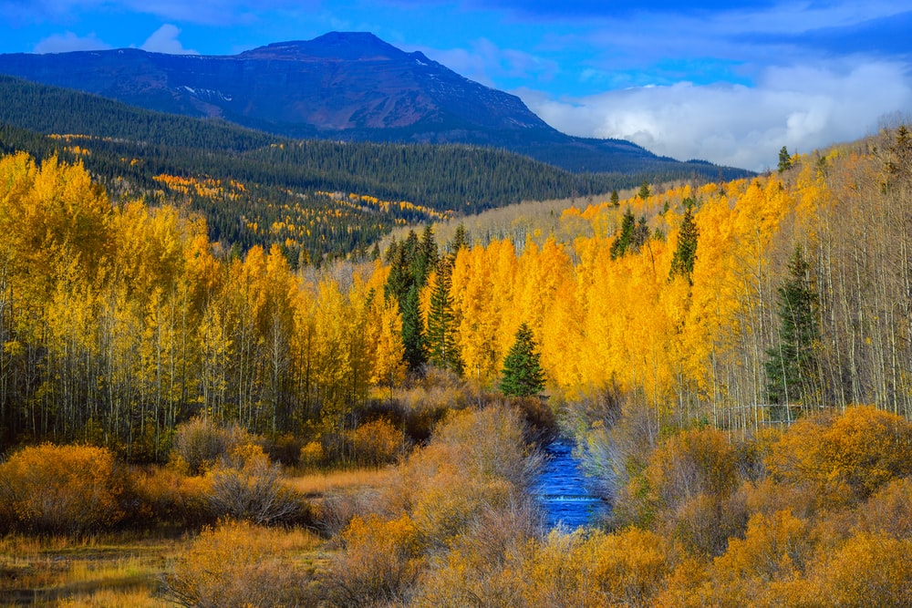 yellow and green trees with mountain long exposure photography