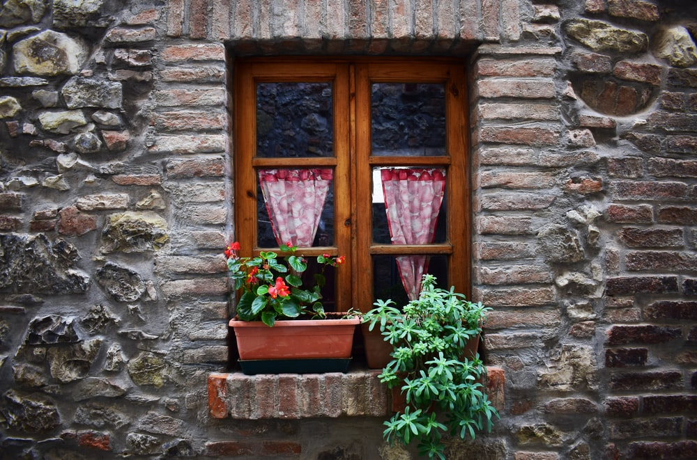 green potted plants in front of closed window