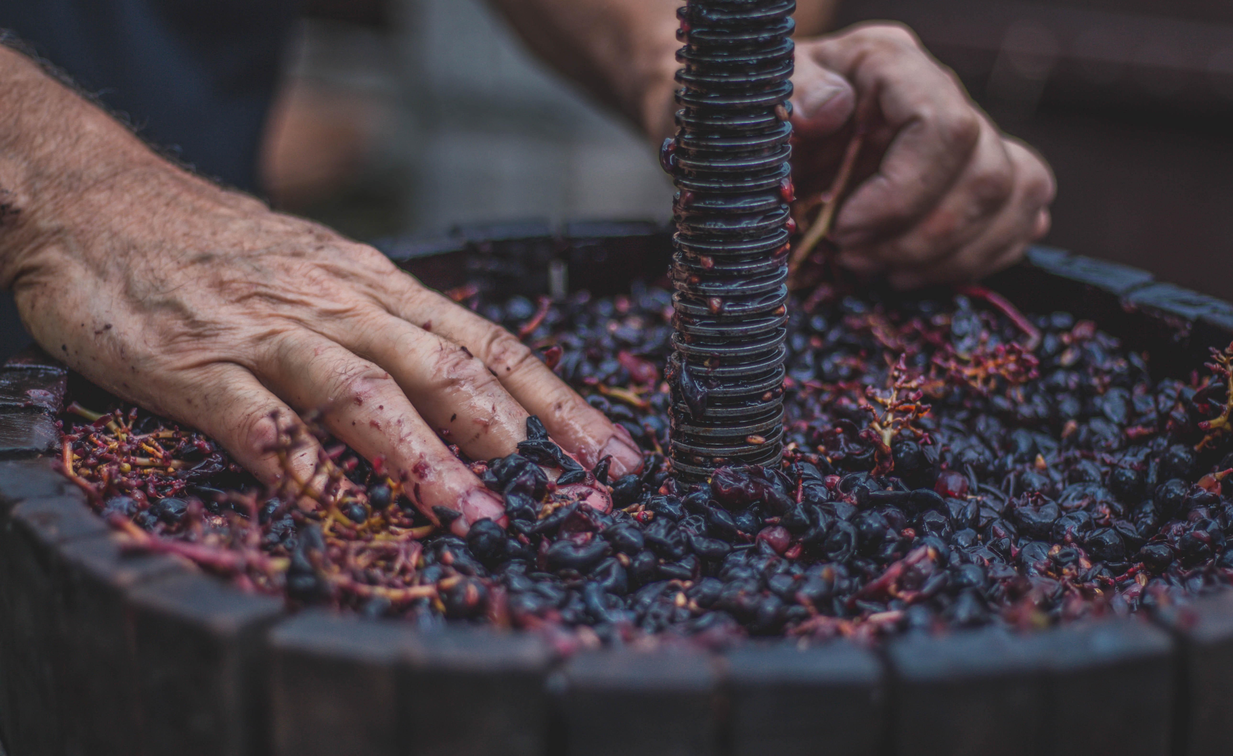 person holding purple fruits on brown barrel