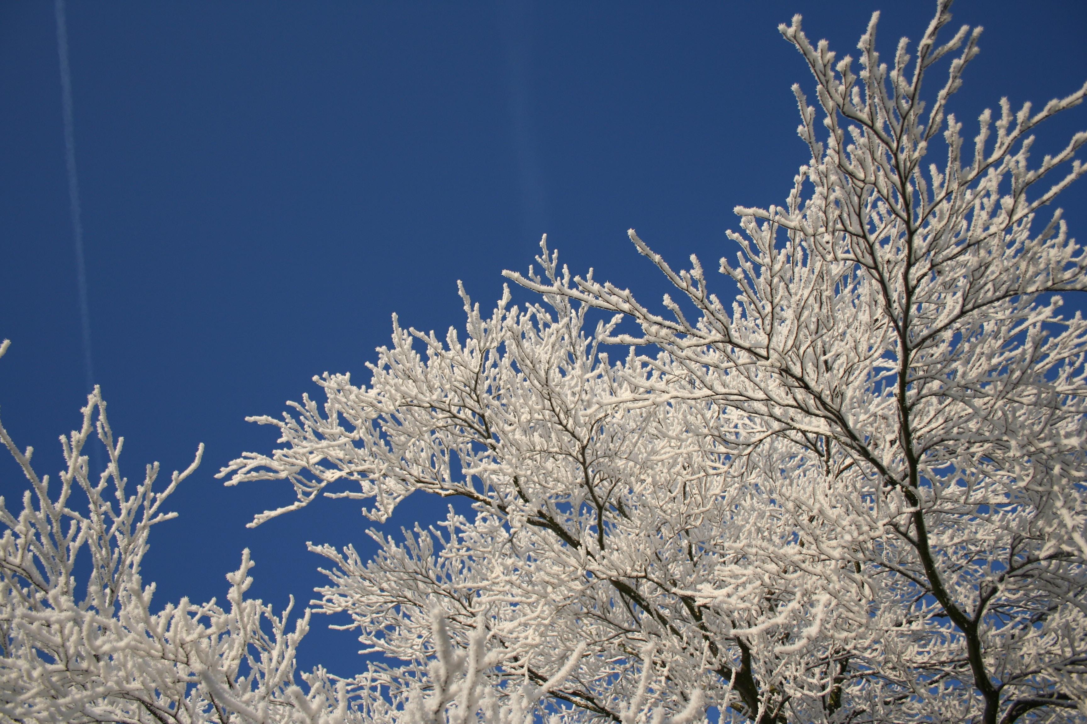 photo of bare tree
