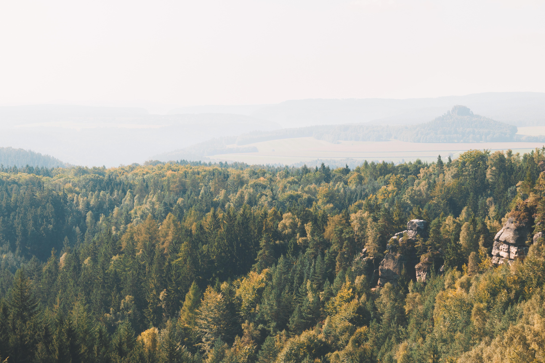 bird's-eye of view trees
