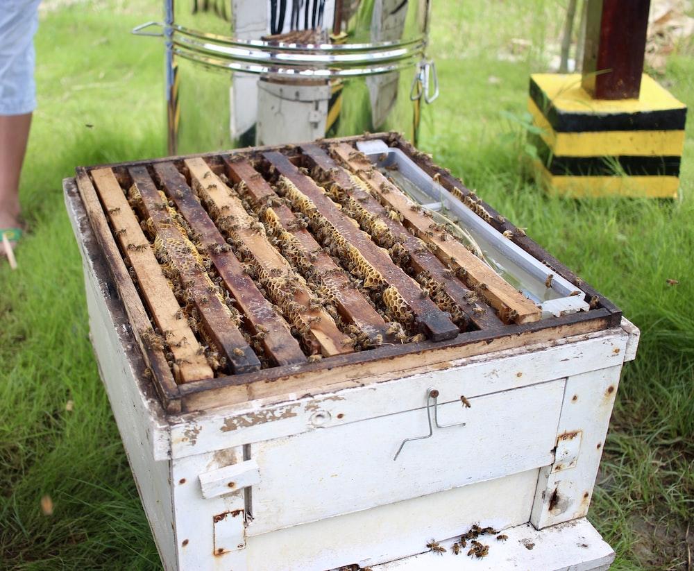 brown bee hive
