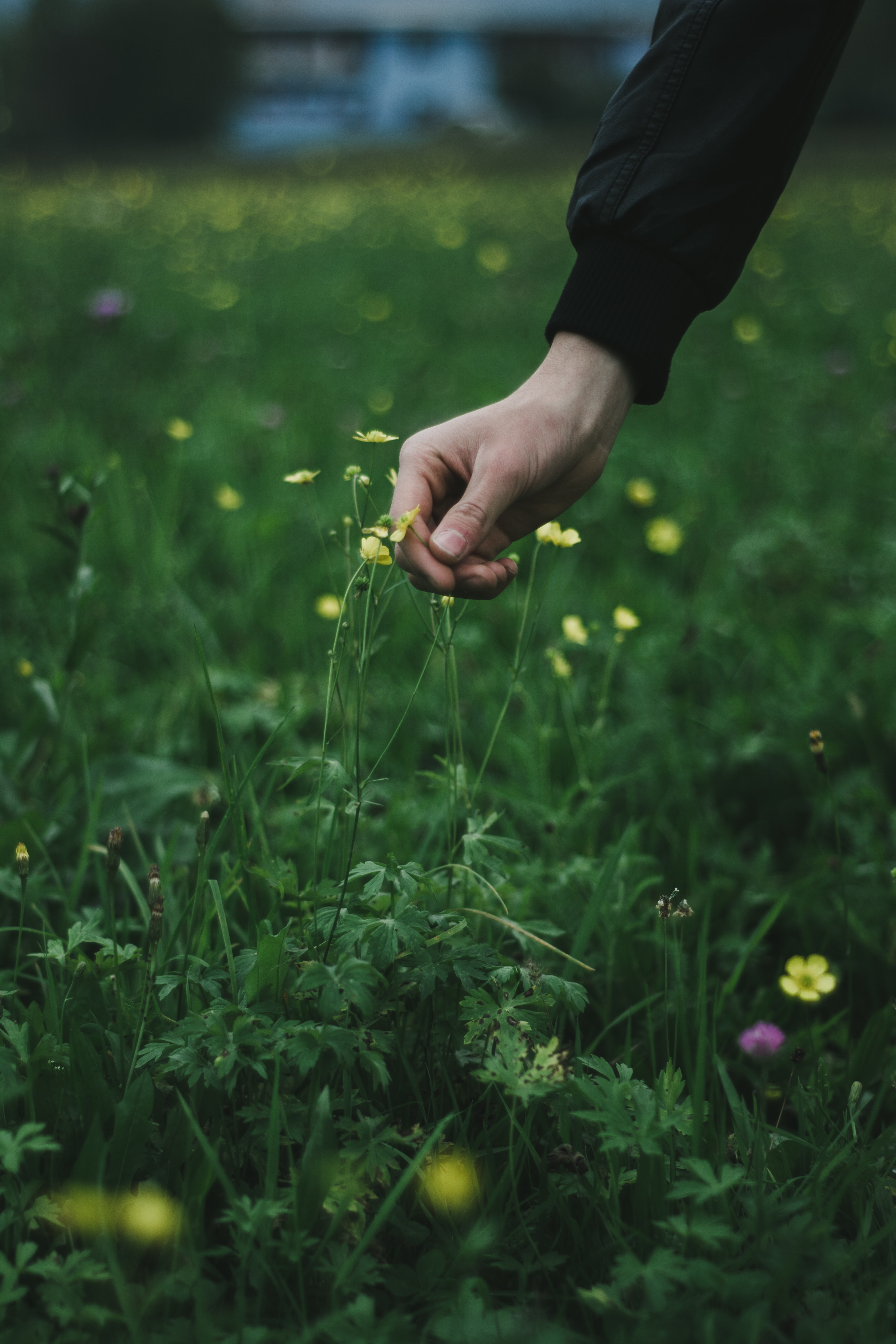 person picking yellow flower