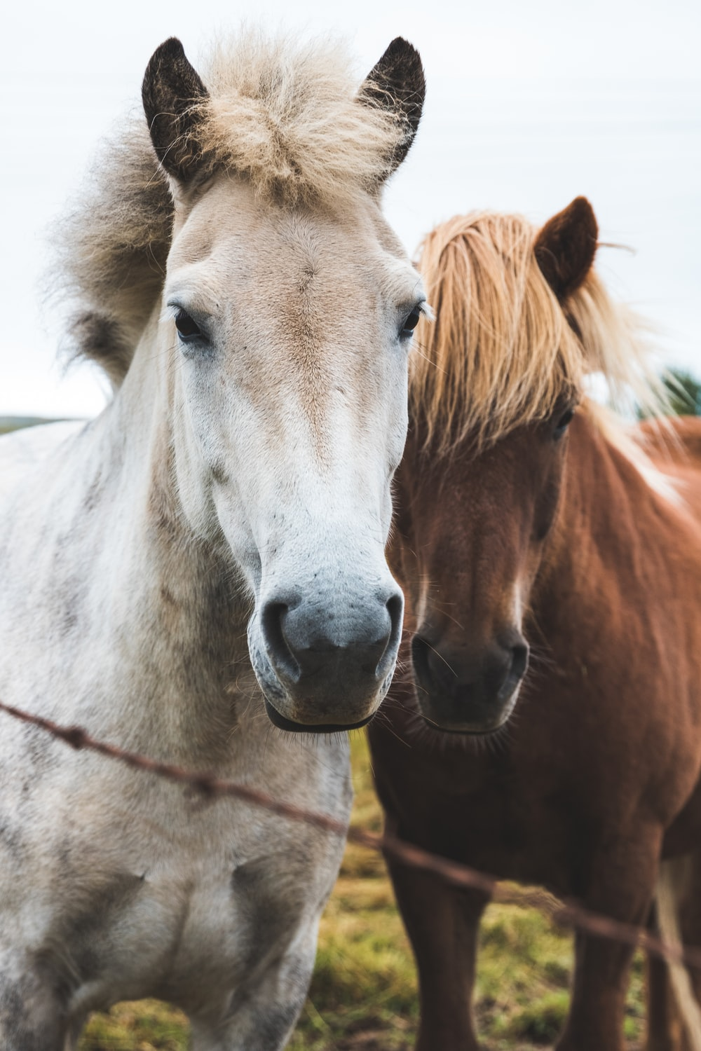 focus photography of two horses